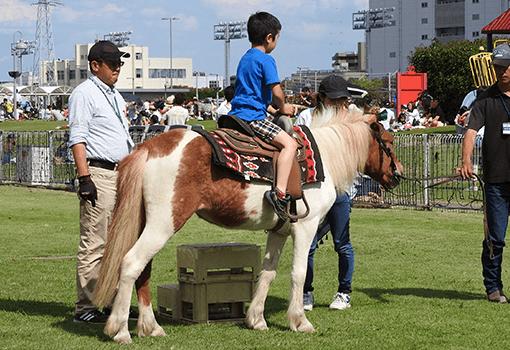 開催 地方 日程 競馬